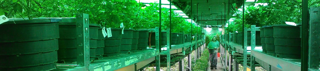 marijuana-growing-warehouse.jpg